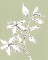 Botanic Drawing I Fine-Art Print