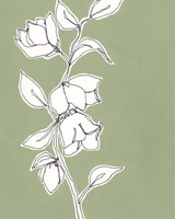 Botanic Drawing II Fine-Art Print