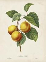 Redoute's Fruit I Fine-Art Print