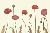 Coral Poppy Display I Fine-Art Print