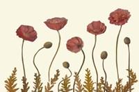 Coral Poppy Display II Fine-Art Print