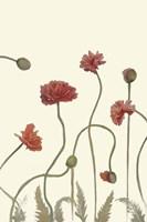 Coral Poppy Display III Fine-Art Print