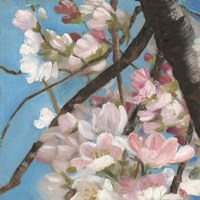 Cherry Blossoms II Fine-Art Print