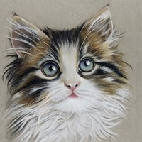 Kitten Portrait II Fine-Art Print