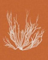 Seaweed Pop I Fine-Art Print