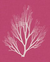 Seaweed Pop III Fine-Art Print
