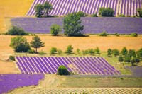 France, Provence, Sault Plateau Overview Of Lavender Crop Patterns And Wheat Fields Fine-Art Print