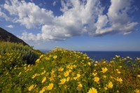 Europe, Greece, Santorini Wildflowers And Ocean Landscape Fine-Art Print