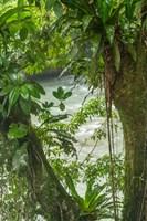 Costa Rica, Sarapiqui River Valley, Rio Puerto Viejo River In Rainforest Fine-Art Print