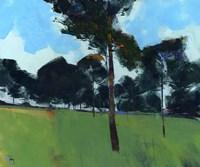 Moorland Pines Fine-Art Print