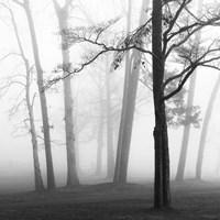 Ethereal Trees Fine-Art Print