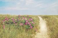 Beach Roses Fine-Art Print