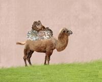 Camel on Pink Fine-Art Print