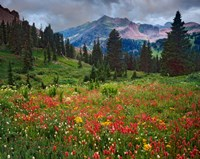 Colorado, Laplata Mountains, Wildflowers In Mountain Meadow Fine-Art Print