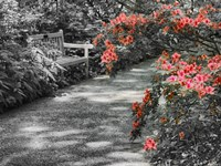 Delaware, Walkway In A Garden With Azaleas And A Park Bench Fine-Art Print