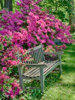 Delaware, A Dedication Bench Surrounded By Azaleas In A Garden Fine-Art Print