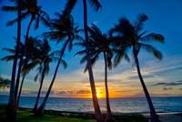 Sunset And Silhouetted Palm Trees, Kihei, Maui, Hawaii Fine-Art Print