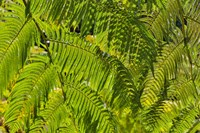 Kula Botanical Gardens, Upcountry, Maui, Hawaii Fine-Art Print