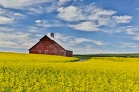 Red Barn In Canola Field Near Genesee, Idaho, Fine-Art Print