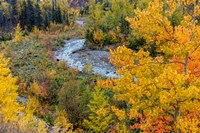Autumn Color Along Divide Creek In Glacier National Park, Montana Fine-Art Print