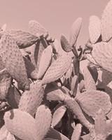Coral Cactus Fine-Art Print