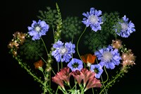 Botanical XI Fine-Art Print