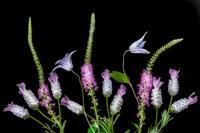 Botanical X Fine-Art Print