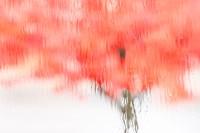 Coral Window Fine-Art Print
