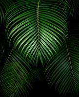 Tropical IV Fine-Art Print