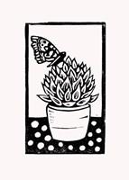 Black Succulent Fine-Art Print