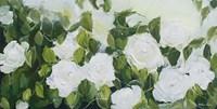 White Garden Roses Fine-Art Print
