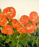 Orange Ranunculus Fine-Art Print
