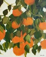 Oranges Fine-Art Print