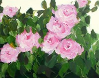 Pink Rose Bush Fine-Art Print