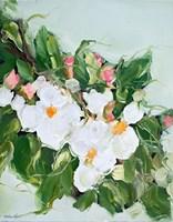 Apple Blossom Fine-Art Print