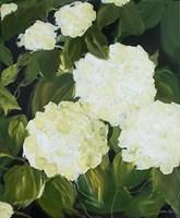 White Hydrangeas Fine-Art Print