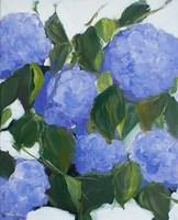Violet Hydrangeas Fine-Art Print