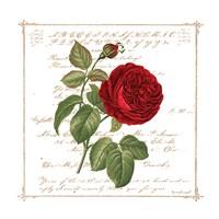 Floral V Fine-Art Print