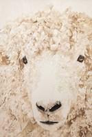 Woolly Fine-Art Print