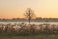 Just Come Cows and A Dead Tree Fine-Art Print