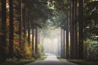 Mysterious Roads Fine-Art Print