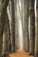 Narrow Alley in the Netherlands Fine-Art Print