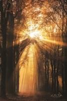Sunburst Fine-Art Print