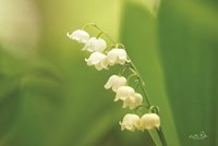 Lily of the Valley Fine-Art Print