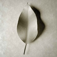One Leaf Fine-Art Print