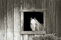 Welcome Mare Fine-Art Print