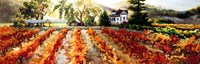 Golden Vineyard Fine-Art Print