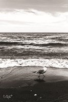 Seagull I Fine-Art Print