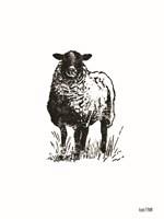 Farmhouse Sheep Fine-Art Print