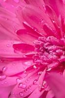 Pink Mum 2 Fine-Art Print